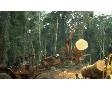 Liberia: Tropenholz aus diesen einzigartigen Wäldern? – Nein! (Petition)