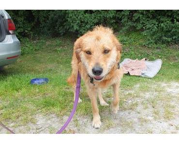 Urlaub mit Hund – ein Erfahrungsbericht