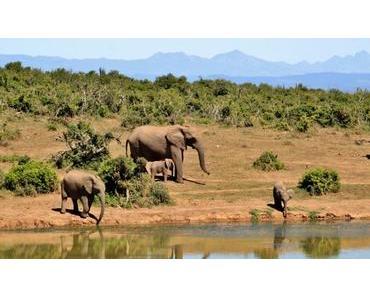 Afrika – EU als Handlanger der Wilderer? – Dazu nein! (Petition)