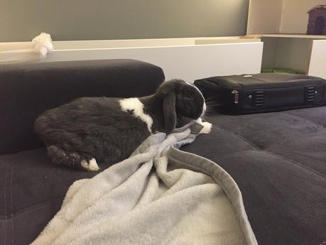 kaninchenstall selber bauen f r die wohnung mein indoor kaninchen auslauf. Black Bedroom Furniture Sets. Home Design Ideas
