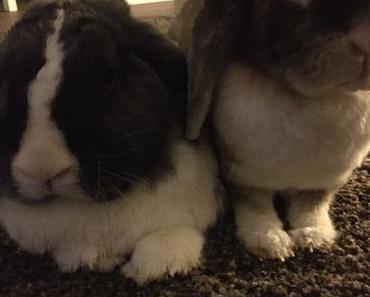 """Kaninchenstall selber bauen – für die Wohnung """"mein Indoor Kaninchen Auslauf"""""""