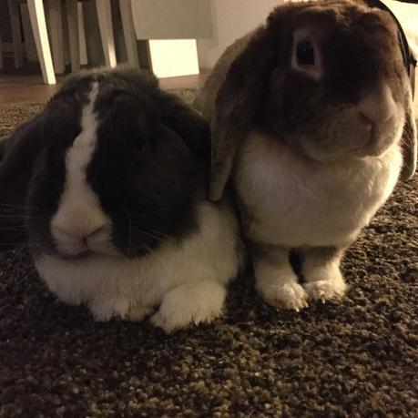 Kaninchenstall Fur Die Wohnung