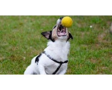Stress begünstigt auch beim Hund Allergieerkrankungen!!!