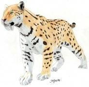 Shuhei Tamura hat ein Faible für Raubkatzen