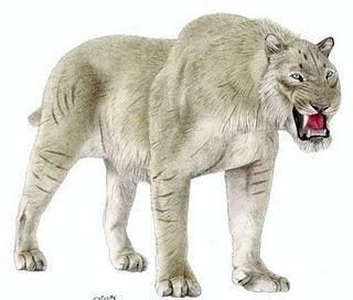 Neue Taschenbücher über Raubkatzen aus der Urzeit