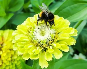 Tag der Honigbiene – der amerikanische National Honey Bee Day 2016