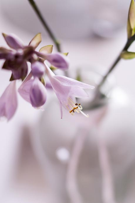 flowers wenn die funkie bl ht. Black Bedroom Furniture Sets. Home Design Ideas