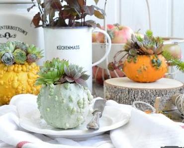 herbstliche Deko mit Sukkulenten / Sukkulenten in a Pumpkin #sukkulentenliebe