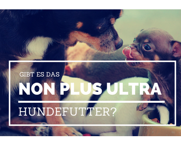 Was ist die Non-plus-ultra-Hundeernährung?