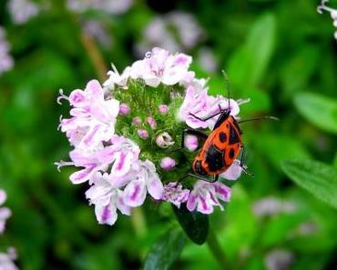 Insekten – Heute krabbelt und summt es bei #PPP37