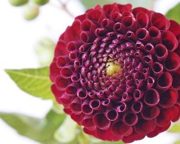 Friday-Flowerday 38/16