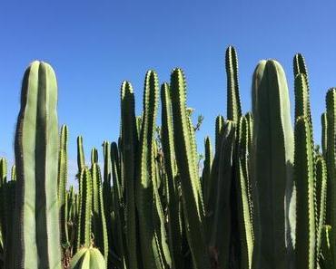 Travel Diary: 8 schöne Orte auf Teneriffa