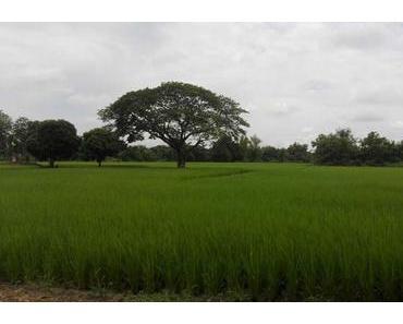 768 Kurven: mit dem Motorrad von Chiang Mai nach Pai