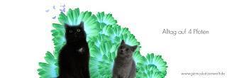 Rassekatze oder Rassemix ? || Wert einer Katze