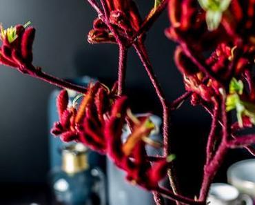 Flowers | Pfötchen in der Vase, Kängurupfötchen nämlich!
