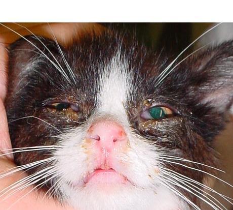 6 Gründe warum deine Katze oft niest – harmloser Grund oder doch ernsthafte Erkrankung?