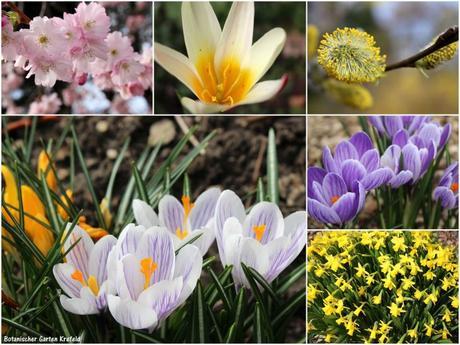 Sommeröffnungszeit im Botanischen Garten Krefeld