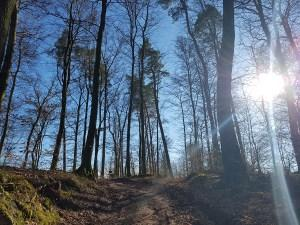 Die Energie des Waldes