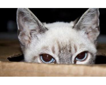 Wurmkur bei Katzen – 13 Fragen (und Antworten) rund um die Entwurmung von Katzen