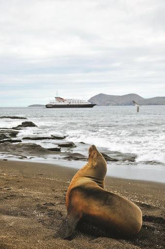 Silversea: Expeditionspakete in der Antarktis