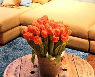 Tipps, wie Sie Ihren Garten, Terrasse und Haus schöner machen!