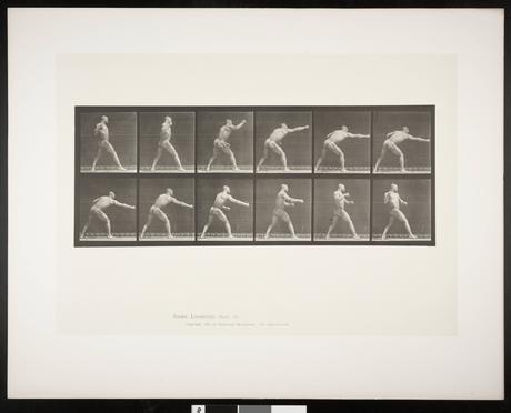 Boxen in der Kunst: Animal Locomotion, Tafel 344 von Eadweard Muybridge