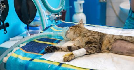 Kostenfrage Kastration: Das kann das Kastrieren einer Katze oder eines Katers kosten