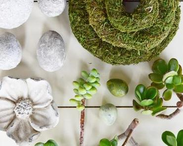 Kreativ mit Sukkulenten ohne Erde