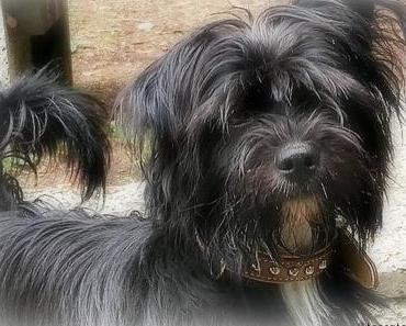 Marli's Keksdose – der Online Shop für Hundebedarf und Hundekekse im Test