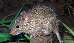 In Madagaskar grassiert die Pest
