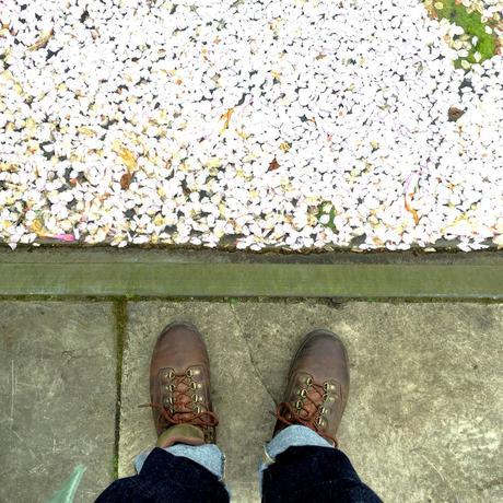 Foto: Kung Shing - Entdeckung in der Sackgasse: Kirschblüten faulenzen auf einem Teich