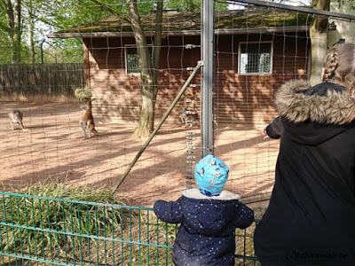 Frühling im Zoo Dresden