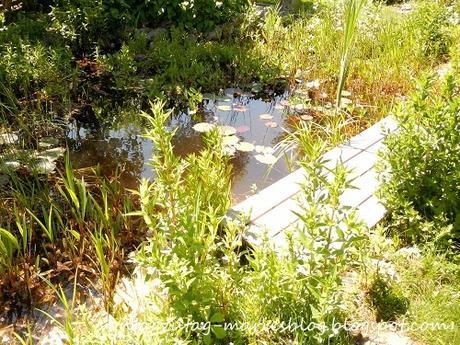 Mein Frühlingsgarten rund um den 20. Mai