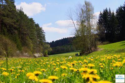 Der karstkundliche Wanderweg in Neuhaus Pegnitz