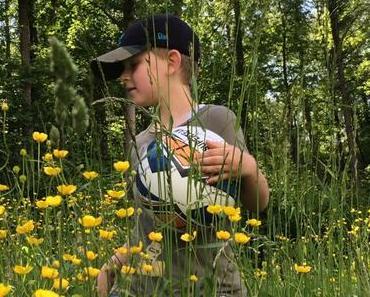Waldbaden: Die beste natürliche Medizin