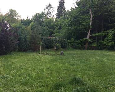 Mein Garten sucht ein Trampolin
