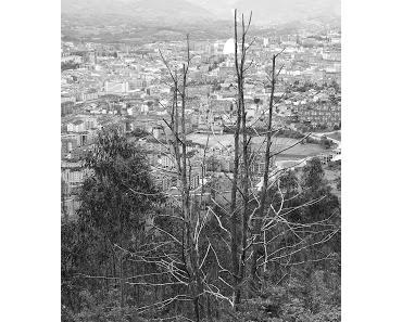 Aufs falsche Pferd gesetzt: Eukalyptus in Galicien