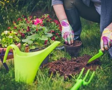 Kleingarten finden: die Vergabekriterien