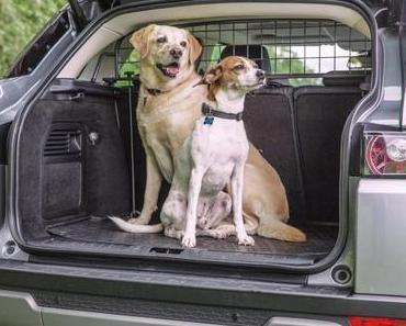 Wenn der Hund im Auto Angst hat