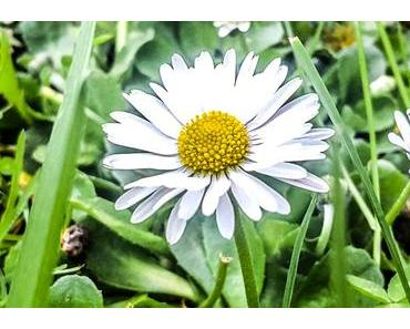 Hoppla-Tag – der US-amerikanische National Upsy Daisy Day