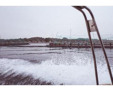 Mein Besuch auf einer Lachsfarm in Norwegen