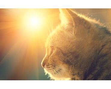 Katzen und Hitze: 8 Tipps wie deine Katze gut durch den Sommer kommt
