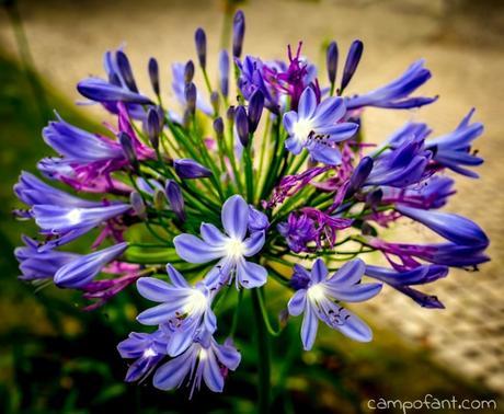 Blume, Wegrand