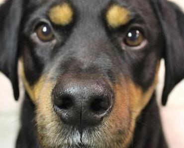 Dogmatismus kommt nicht von DOG