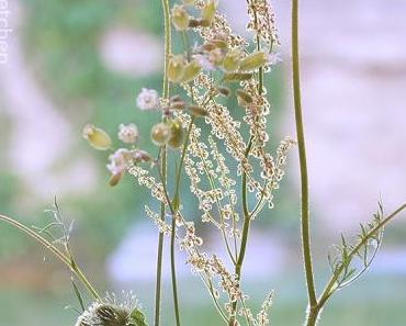 Friday-Flowerday 28/17