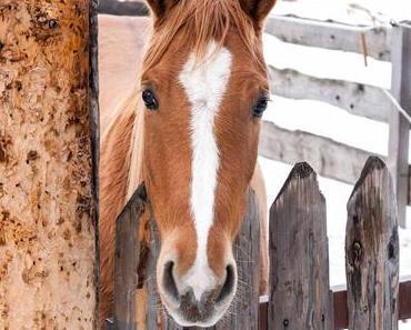 Ich-mag-Pferde-Tag – der US-amerikanische National I Love Horses Day
