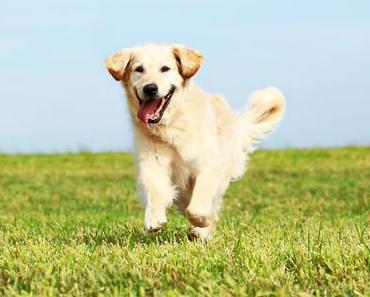 Die Top-10 der gesunden Nahrungsmittel für den Hund