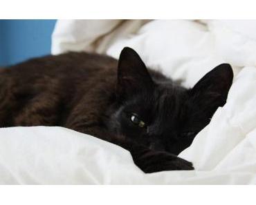 Katzen nach einer Operation – 10 Nachsorge-Tipps für eine schnelle Erholung