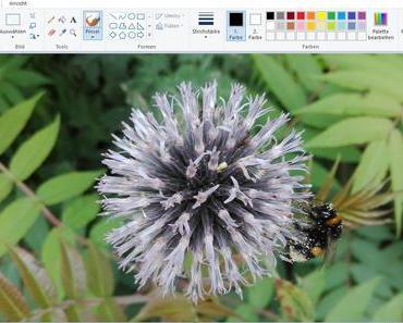 MS Paint geht nach dem Fall Creators Update