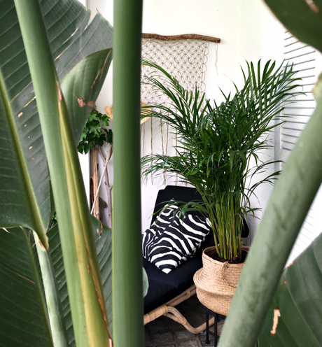 Urban Jungle Bloggers: Tropicool